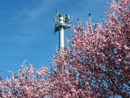 Radio tower against a blue sky with cherry blossoms in the lower right corner.